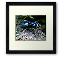 see flys can be beautiful  Framed Print