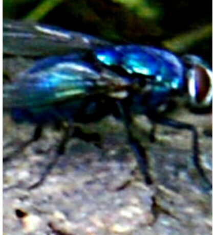see flys can be beautiful  Sticker