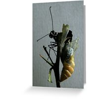 Emerging butterfly Greeting Card