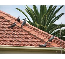 Pidgeons On A Hot Tiled Roof Photographic Print