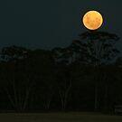 Full Moon Rising by Rachael Taylor