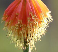 Adelaide Botanic Gardens by Stuart Daddow Photography