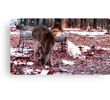 Sharing A Meal..My chickens forage with a squirrel, and a motherless baby deer! Canvas Print