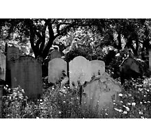 Brompton Cemetery. London, England. 2009 Photographic Print