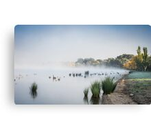 Swans at Lake Burley Griffin Canvas Print