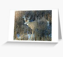 COLD BUCK Greeting Card