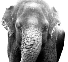 Elephant Coming by Deanna Roberts Think in Pictures