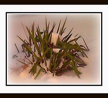 TALL GRASS by gracecc5249