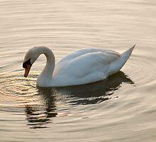 Swan Lake by newbeltane