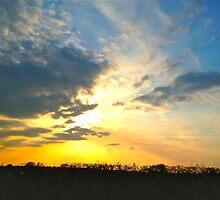 Sunset over Gosbecks Archaeological Park II by newbeltane