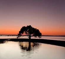 The First of Many - Victoria Point Qld Australia by Beth  Wode