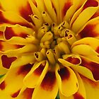 Marigold 2 by art2plunder