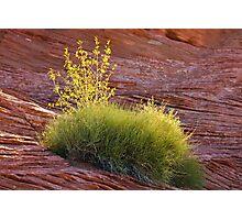 Desert Plant Photographic Print