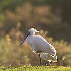 The Woolley Sheep Bird by byronbackyard