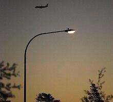 Sunset Flight by Jenni Greene