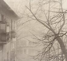 foggy by Alexandra Brovco