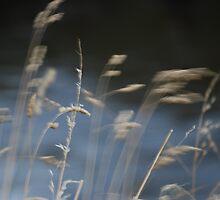 Evening Breeze by Jenni Greene
