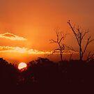 Sunset Silhouette by Rowan Nancarrow
