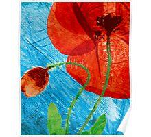 Pressed Field Poppy Flower Art Photo by Paul Williams Poster