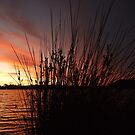 Through the reeds, the sun set reddens - Canning River, Perth, Western Australia by Karen Stackpole