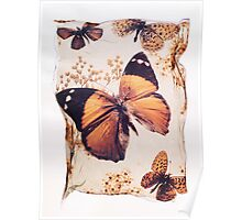 Brown Butterfly by Paul Williams Poster