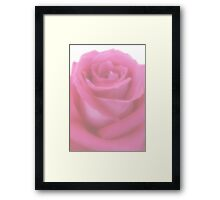 Soft Pink Rose Framed Print