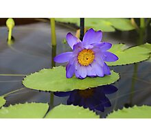 Blue Lotus Flower Photographic Print