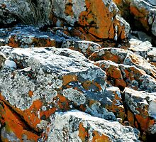 Colouful Rocks at Rocky Cape National Park, Tasmania, Australia. by kaysharp