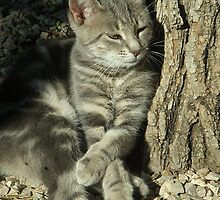 Those cute paws... by AleFletcher
