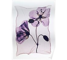Pressed Wild Cranesbill Flower by Paul Williams Poster