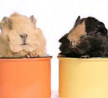 Guinea pig babies by mirenar