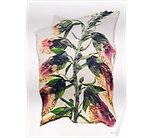 Pressed Foxgloves Flowers - by Paul Williams Poster