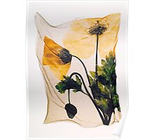 Yellow Welsh Poppy - by Paul Williams Poster