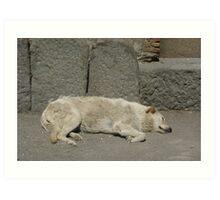 resident of Pompeii AD2009 Art Print
