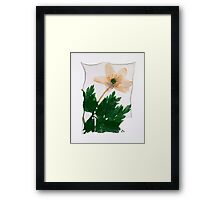 Wild Anenome Flower - by Paul Williams Framed Print