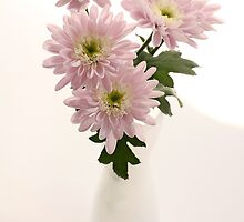 chrysanthems in white vase by OldaSimek