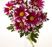 chrysanthems in glas vase by OldaSimek