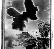 """Abstract Black and White Art Photo - """"Butterfly"""" by Paul Williams"""