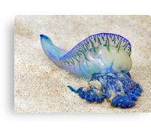 The Blue Bottle - South Stradbroke Island - Australia Canvas Print