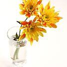 yellow chrysanthems in glas vase by OldaSimek