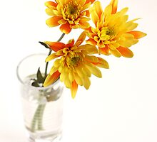 yellow chrysanthems in glas vase by OldaSimek