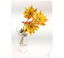yellow chrysanthems in glas vase Poster