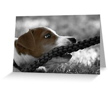 Jack and the rope... (Jack Russel)  Greeting Card