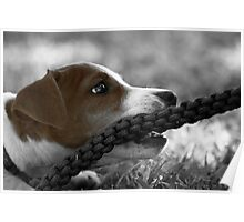 Jack and the rope... (Jack Russel)  Poster