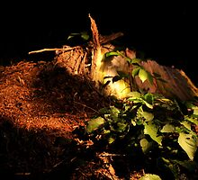 Stump light painting by 3216andy