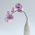 phalaenopsis orchid in white vase by OldaSimek