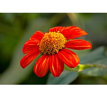 Flowering Flower Photographic Print