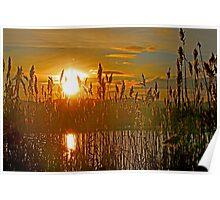 Sedge Sunset Poster