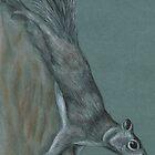 squirrel by mindgoop