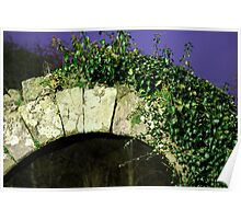 Ivy Arch Poster